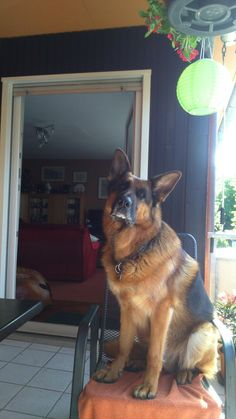 GSD-Max