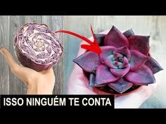 Plantar, Succulents, Organic, Make It Yourself, Floral, Flowers, Youtube, Cactus, China