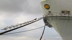 Even the birds can't wait to sail on Royal Princess!