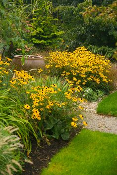 Rudbeckia - Yellow Coneflower - perennial. full sun, drought tolerant, dried blooms can be saved for seed