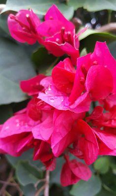 Veranera en flor de nuevo, jardin=vida