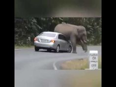 animals attack to human 2018 very dangerous be carefull your self please. Best Short Films, Animal Attack, Animals, Animales, Animaux, Animal, Animais