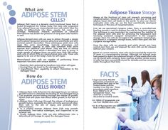 GeneCell Adipose Brochure, Pg.2 Muscle Disorders, Adipose Tissue, Heart Muscle, Liposuction, Stem Cells, Human Body, Fat
