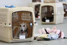 Pets will no longer be allowed to be checked as luggage on airline carrier