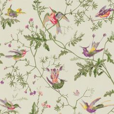 Lovely Cole And Son Wallpaper Love Hummingbirds Designer Luxury Print