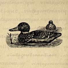 Digital Two Ducks Image Graphic Illustration Printable Download Antique Clip Art Jpg Png Eps 18x18 HQ 300dpi No.1388 @ vintageretroantique.etsy.com #DigitalArt #Printable #Art #VintageRetroAntique #Digital #Clipart #Download