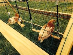 6 Chicken Boredom Busters To Keep Your Chickens Busy Cheap Chicken Coops, Best Chicken Coop, Building A Chicken Coop, Chicken Coup, Chicken Lady, Chicken Coop Designs, Keeping Chickens, Raising Chickens, Chicken Rearing