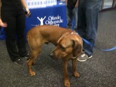 Tim Tebow's dog Bronx came to the workout at D1Sports (June 24, 2012)