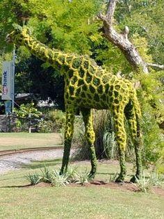 Giraffe Topiary!