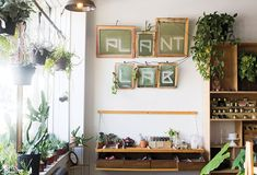 Plants clean the air naturally, taking away pollutants. Instead of flowers thay die or air wicks that contain synthetic chemicals, indoor plants are a beautiful option 🌿 Bedroom Plants Decor, Bohemian Bedroom Decor, House Plants Decor, Diy Bedroom Decor, Living Room Decor, Home Decor, Bedroom Decor For Couples, Room With Plants, Aesthetic Room Decor