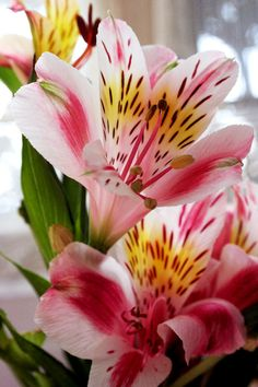 Alstroemeria is one of my favorites, purely due to its coloring and bright patterns (it doesn't have much of a fragrance).
