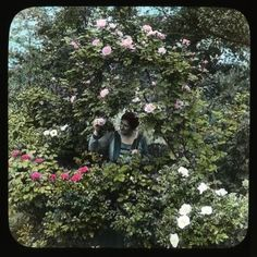 #June is #Rose Month! Here's a #vintage lantern slide of a woman enjoying her rose #garden at Breeze Hill in Harrisburg, Pa. Hand-painted lantern slides were developed as a way to project images onto a large surface for viewing by an audience. This slide is from Smithsonian Gardens' Archive of American Gardens. #photo #NoFilter