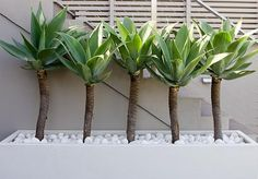 green plants in contemporary containers