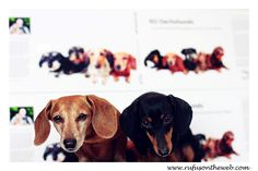 "Special 24-hour Black Friday sale.  Rufus & Emily say, ""what are you waiting for!?""  Make a tax deductible donation and get a book.  It makes for a great gift to get or give.  http://wp.me/p27Fw1-Bd  #dachshund #doxies #blackfriday"