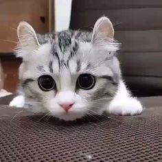#Cats  #Cat  #Kittens  #Kitten  #Kitty  #Pets  #Pet  #Meow  #Moe  #CuteCats  #CuteCat #CuteKittens #CuteKitten #MeowMoe      MeowMoe - : mugimeshi323 ...   https://www.meowmoe.com/100681/