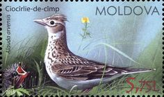 Moldova Postage Stamps (Commemorative) 2015 № 927 | Eurasian Skylark (Alauda Arvensis) | Issue: Birds of Moldova (III)