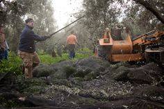 andalucia olive farming - Google Search