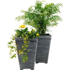Terraneuva Tall Square Planter - Pack of at Homebase -- Be inspired and make your house a home. Buy now. Diy Garden, Plants, Garden, Container Plants, Front Garden, Planter Pots, Garden Decor, Planters, Backyard
