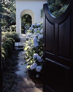 A gate into a garden room with hydrangeas in full bloom.