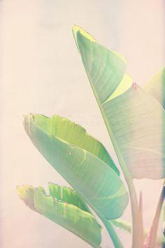 Instant Download Download Rainbow Stil Fotografie DIY Fotokunst Wohnheim böhmischen Dekor Pink Banana Leaf Vögel Paradies Tropical
