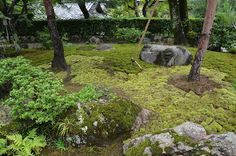 Noel's Garden Blog: A hard look at the Japanese garden - Part One