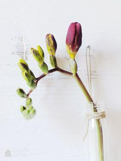 Festa di primavera: fresie in ampolla