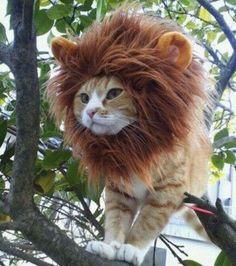Déguisement pour chat : Crinière de lion