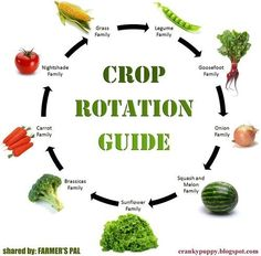So how do you figure out a workable crop rotation plan as a home gardener?  (source) http://www.farmerspal.com/ You start with the basics: understanding what the 9 main families are in the vegetable...