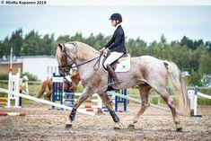 Finnhorse stallion Lokson Taikahaave 246001S00141389 - Sukuposti Show Jumping, Coat Patterns, Pretty Horses, Horse Girl, Pansies, Drawing Ideas, Equestrian, Pony, Racing
