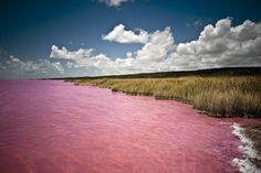 Pink-Lake-Senegal.jpg (800×534)