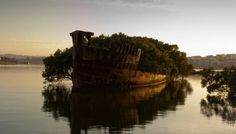 Remains of the SS Ayrfield, Homebush Bay, Australia
