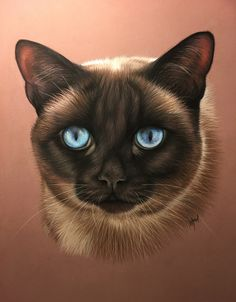 Wildlife Paintings, Animal Paintings, Animal Drawings, Big Cats, Cats And Kittens, Colorpoint Shorthair, Dog Ornaments, Pen Art, Siamese