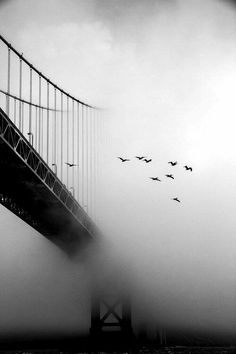 Black and White Photography - The fog drifts as though it is asleep, lifts as it awakens, revealing the beauty it had kept a secret under its blanket. Amazing Photography, Street Photography, Art Photography, Fotografia Pb, Foto Picture, Cool Photos, Beautiful Pictures, Nature Pictures, Photocollage