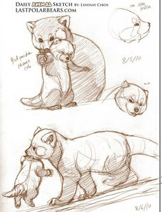 and baby sketch Red Panda Tutorial Red Panda Tutorial – Юлия Овчарова - Baby Animals Panda Sketch, Baby Sketch, Panda Drawing, Cartoon Drawings Of Animals, Animal Sketches, Drawing Sketches, Panda Illustration, Panda Funny, Nature Sketch