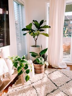 Decor, House Plants Indoor, Plant Decor Indoor, Plant Decor, Large Indoor Plants, Living Room Plants, Room With Plants, Living Decor, Aesthetic Bedroom