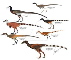 """Compsognathid dinosaurs by Gabriel N. Uguet - """"Most genera believe to belong to the family Compsognathidae or be closely related to it. I included only genera for which adults are known. Mirischia might be a basal Tyrannosauroid."""""""