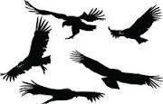 Resultado de imagen para tatuaje de condor volando