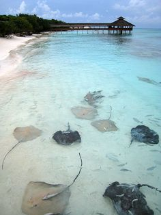 Swam with stingrays- done! And I kissed one!