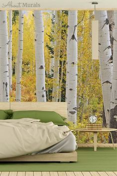 Watch this Aspen tree wallpaper on CHCH TV and see it on real customer's walls. The removable wallpaper goes up quickly and easily and peels off in minutes. Tree Bedroom, Forest Bedroom, Fall Bedroom, Tree Wallpaper Room, Birch Tree Wallpaper, Birch Tree Mural, Forest Mural, Yellow Tree, Free To Use Images