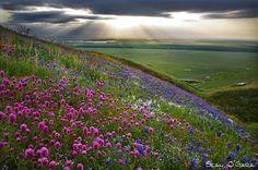 Spring Emerges - California by Sean O'Gara on 500px