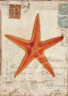 Free Printable Pictures of Starfish | Antique Starfish Art Print 5 x 7 Starfish by 1001treasures