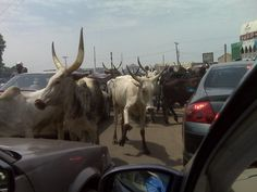 Nigeria Photography | Travel Photography Featured photos taken in Nigeria Kano traffic
