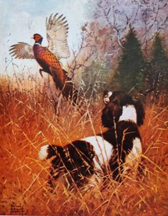 vintage art Hunting Spaniel Bird Dog with Ring-Neck Pheasant by Lynn Bogue Hunt