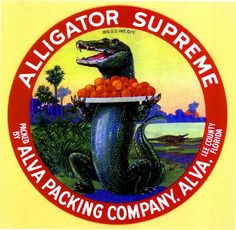 Alva, Lee County Florida Alligator Supreme Orange Citrus Fruit Crate Box Label Art Print. $9.99, via Etsy.