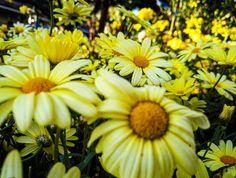 #Finland #europe #flower #travel #instatravel #travelgram #flowerstagram #nature #ilovetravel #instatravelling #instavacation #travelstroke #travelling #trip #traveltheworld #igtravel #travelpics #tourist #travelphoto #visiting #travels #travelphotography #beauty #amazing #arountheworld #ig_worldclub #photooftheday #picoftheday