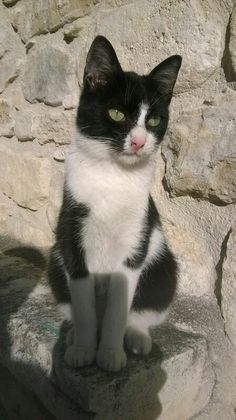 Uovo dei gattini dell'Agriturismo #ilportone Cats, Gatos, Kitty Cats, Cat Breeds, Kitty, Cat, Kittens