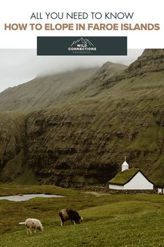 How To Elope In The Faroe Islands Coach Tours, Tourist Spots, Faroe Islands, Elopement Inspiration, Summer Months, Hiking Trails, Wedding Couples, Wild Flowers, Tourism