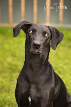 pet photography black dog tips
