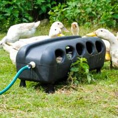 BEC Automatic Duck Drinker Trough at Flyte so Fancy. Keeps water clean, suitable for all poultry. Tough plastic drinkers, made in UK by BEC. Backyard Ducks, Backyard Farming, Chickens Backyard, Duck Farming, Goat Farming, Raising Ducks, Raising Chickens, Duck Waterer, Duck House Plans