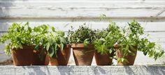 Il balcone aromatico: come coltivare le piante aromatiche in vaso!